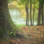 Ładny oraz {zadbany ogród to nie lada wyzwanie, zwłaszcza jak jego pielęgnacją zajmujemy się sami.